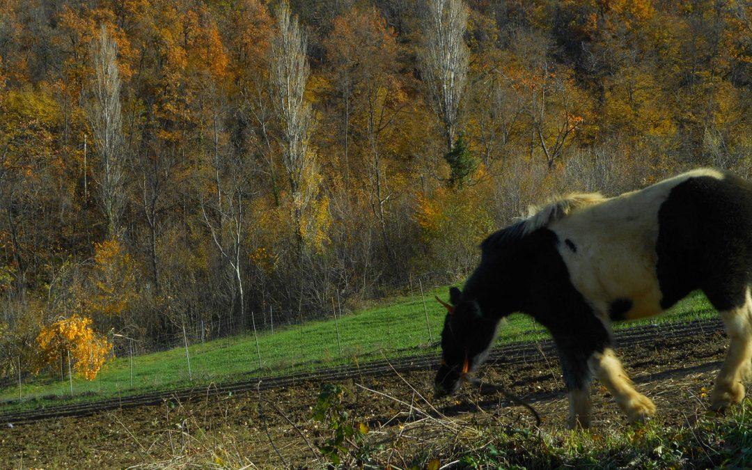 Domenica 17 dicembre – Il Pony: Eviandare – Escursione